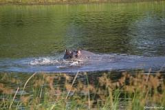 Okavango00085