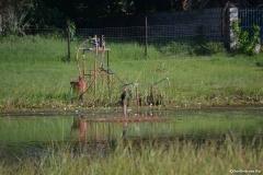 Okavango00113