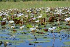 Okavango00357