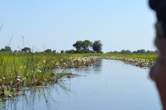 Okavango00365