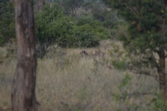 Kruger00909