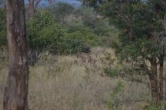 Kruger00938