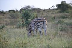 Kruger00949