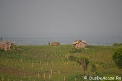elephanthome399