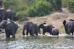 elephanthome571