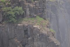 Zambia00213