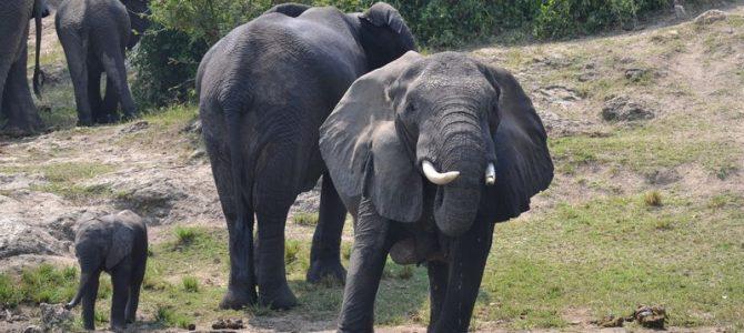 "Queen Elizabeth Park – primul meu ""safari"" (4)"