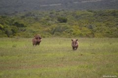AfricaS00879