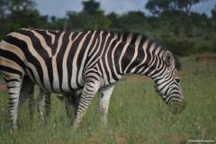 Kruger00428