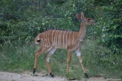 Kruger00480