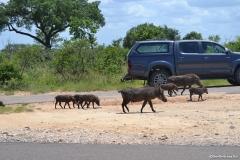 Kruger00496