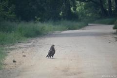 Kruger00544