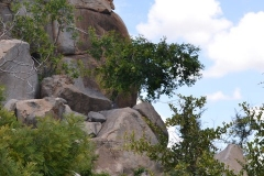 Kruger00564
