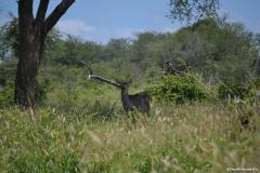 Kruger00582