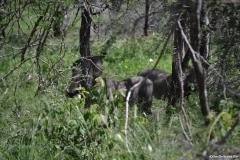Kruger00668
