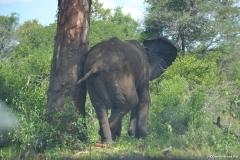 Kruger00688