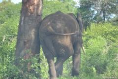 Kruger00689