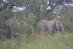 Kruger00293
