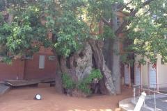 BotswanaI00106