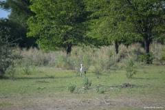 Okavango00281