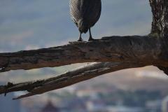 Cape-Town00024