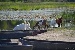 Okavango00290
