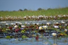 Okavango00355