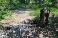 Okavango00388