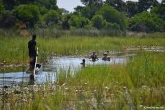Okavango00467