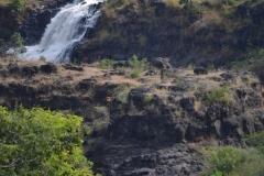 cascada31
