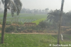 Tren-Egipt2