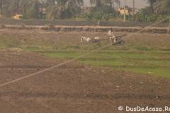 Tren-Egipt40