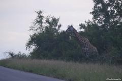 Kruger00271
