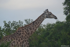 Kruger00279