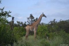Kruger00304