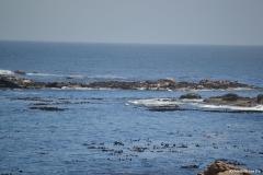 Cape-Town00162
