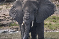 elephanthome566