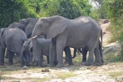 elephanthome590