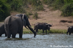 elephanthome609