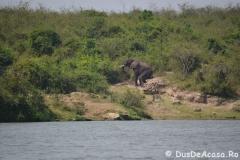 elephanthome690