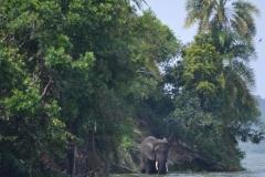 elephanthome698