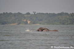 elephanthome702