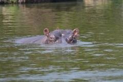 elephanthome639