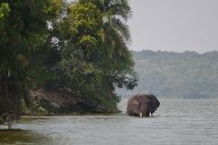 elephanthome707
