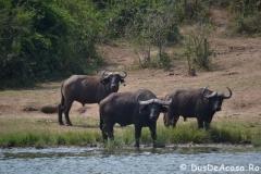 elephanthome624