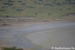 elephanthome1017