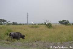elephanthome1023