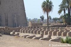 Luxor-East-Bank4