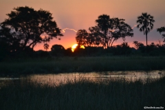 Okavango00036