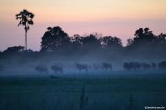 Okavango00053